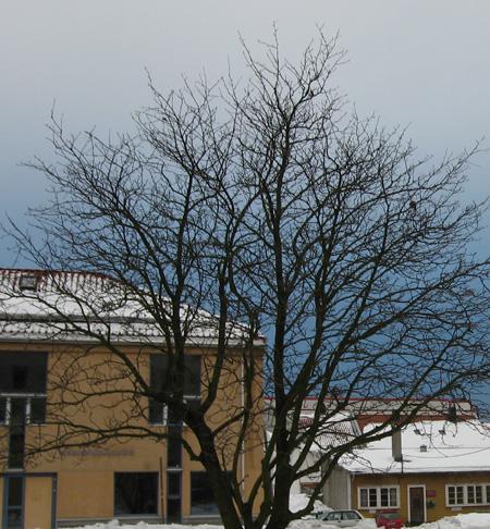 20060223morgenhimmel.jpg