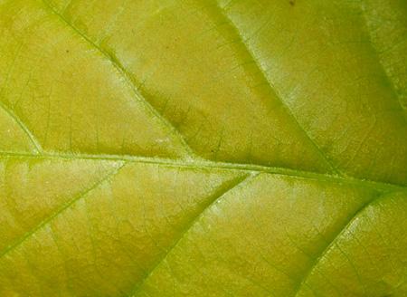 20070601makro3.jpg