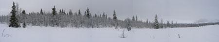 vinterskog.jpg